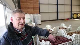 Aardappelprofessor Kor Berghuis poot miljoenen knolletjes in Kloosterburen - Bie de Boer (23)