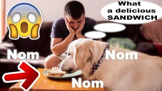 Will my dog steal my sandwich? [FUNNIEST VIDEO EVER]