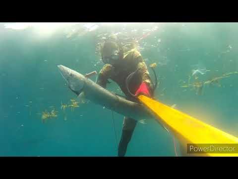 Spearfishing Philippines (Cebu South)