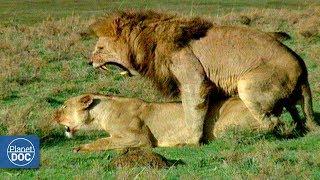 Ngorongoro Wildlife. Tanzania - Part 2