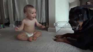 Rottweiler And Baby Playing With Plastic Bottle