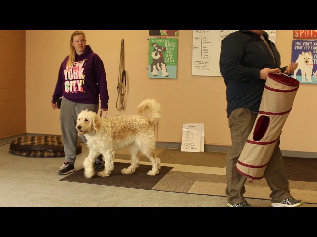 Dog Who Serve- How to Evaluate a Potential Service Dog- Finding the Right Dog for Work