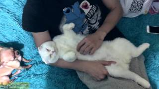 Крепкий сон кота