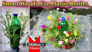 How To Grow Portulaca Cuttings In The Summer Season ll Smart Use Of Plastic Bottles In Your Garden