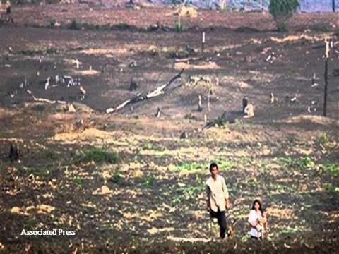 deforestation in cambodia essay help