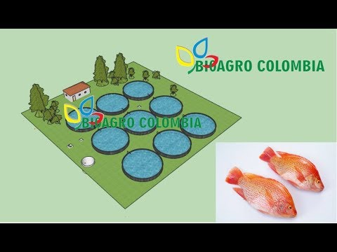 Bioagro colombia s a s youtube for Piscicultura en tanques plasticos