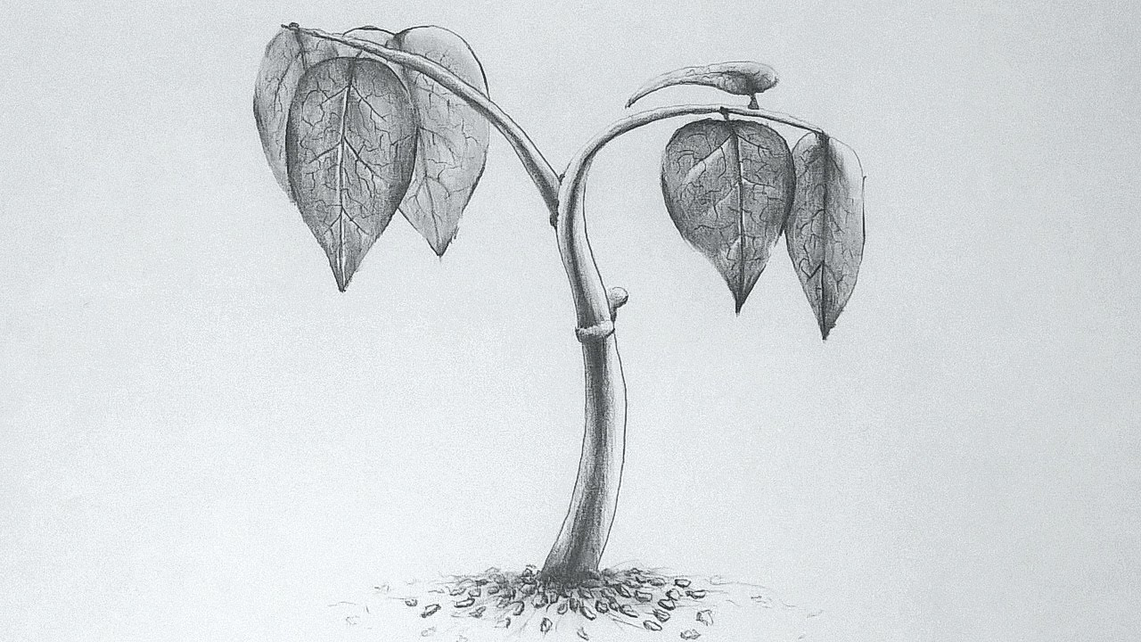 Drawing A Small Plant