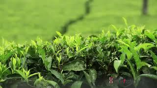 Munnar Kerala tourism |Munnar|keralain360