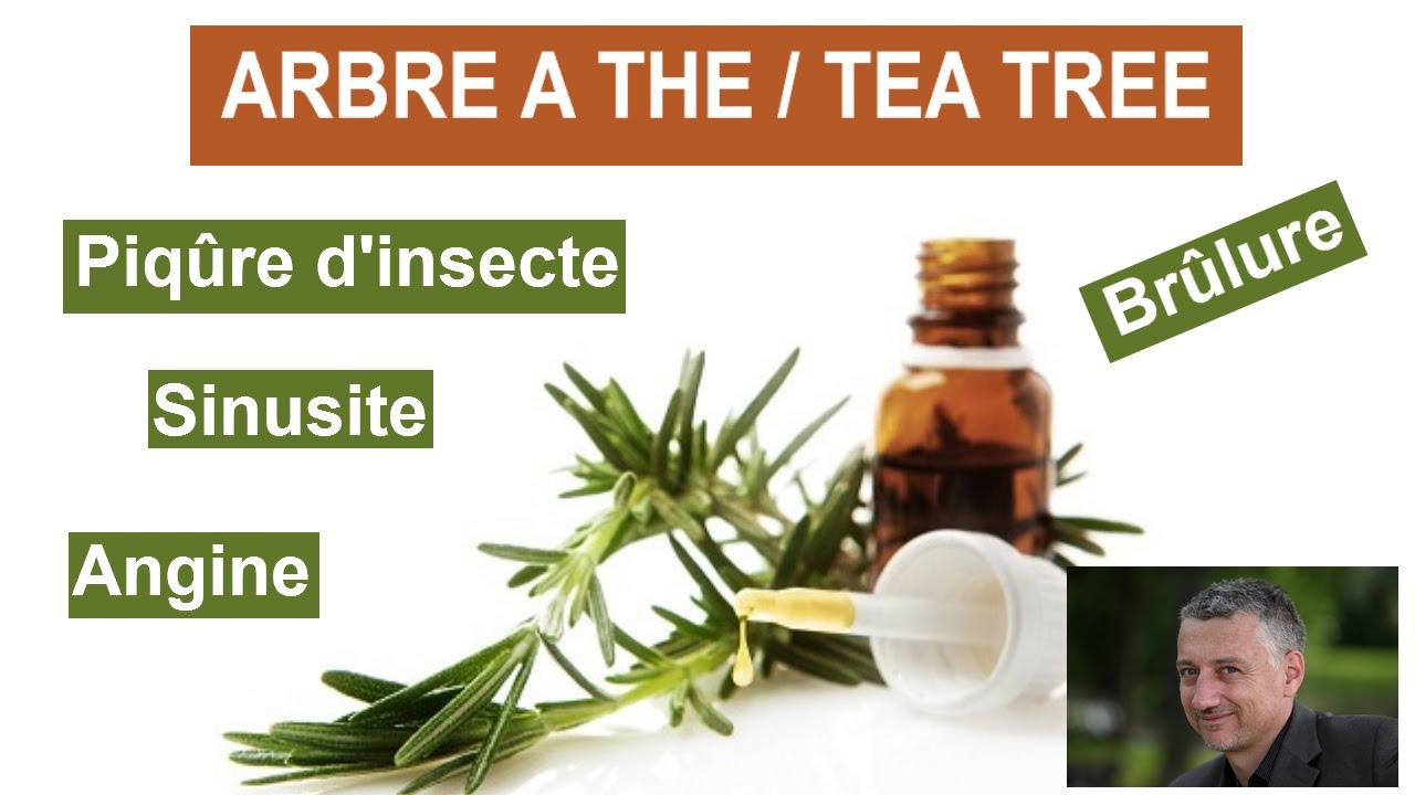 Huile Essentielle Arbre A The Ou Tea Tree Sublime