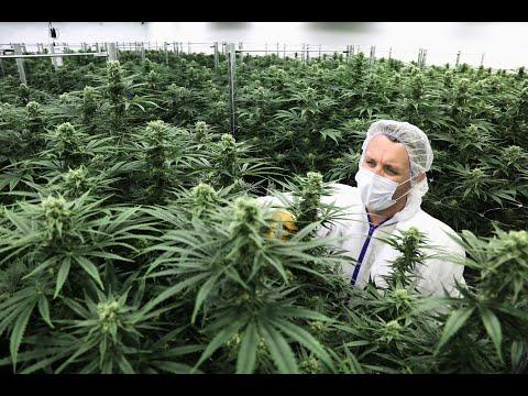 Конопля скачать любавин обмануть тест марихуану