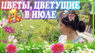 Цветы, цветущие в июле / Многолетние и однолетние цветы(В этом видео я хочу показать те цветы, которые цветут в июле у меня на даче. Моя коллекция не велика, но и..., 2016-07-28T09:37:03.000Z)