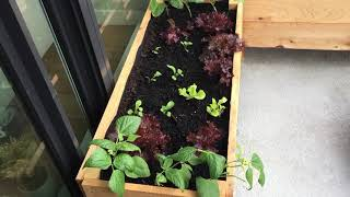 Urban Gardening - Tips on Growing in Small Spaces