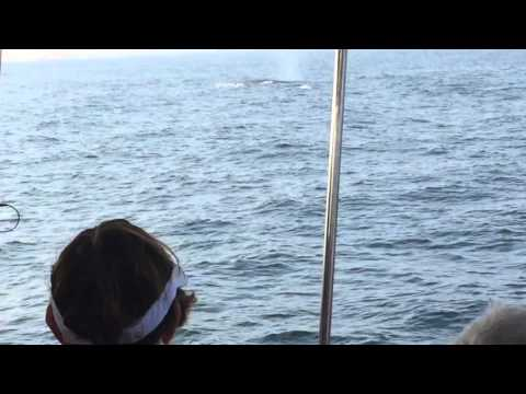 Whale Watching Indian Ocean Srilanka