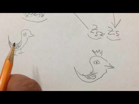 Afghan pigeon genetic 3A