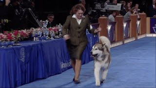 AKC National Owner Handler Series  Best in Show