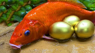 Stop Motion ASMR - Reds Fish Octopus Yellow Frog Petsmart eel in hole Primitive Cooking Cuckoo