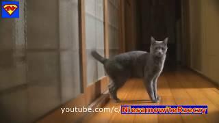 Balti - Ya Lili Feat Hamouda 😂 بصوت القطط التركية الجميلة
