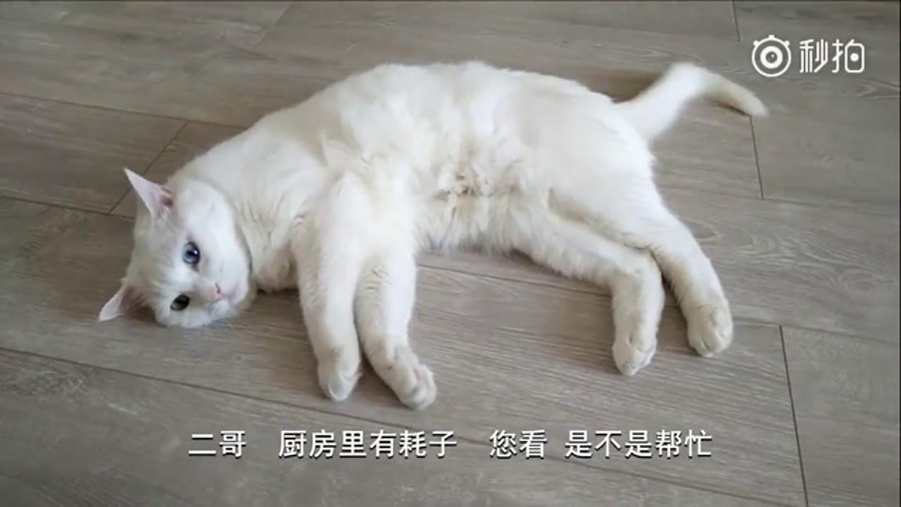 cats in the kitchen kohler undermount sink 中华气死猫主治各种没有猫病 youtube