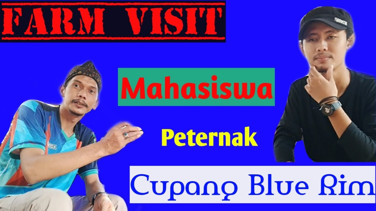 FARM VISIT || mahasiswa peternak cupang Blue Rim - YouTube