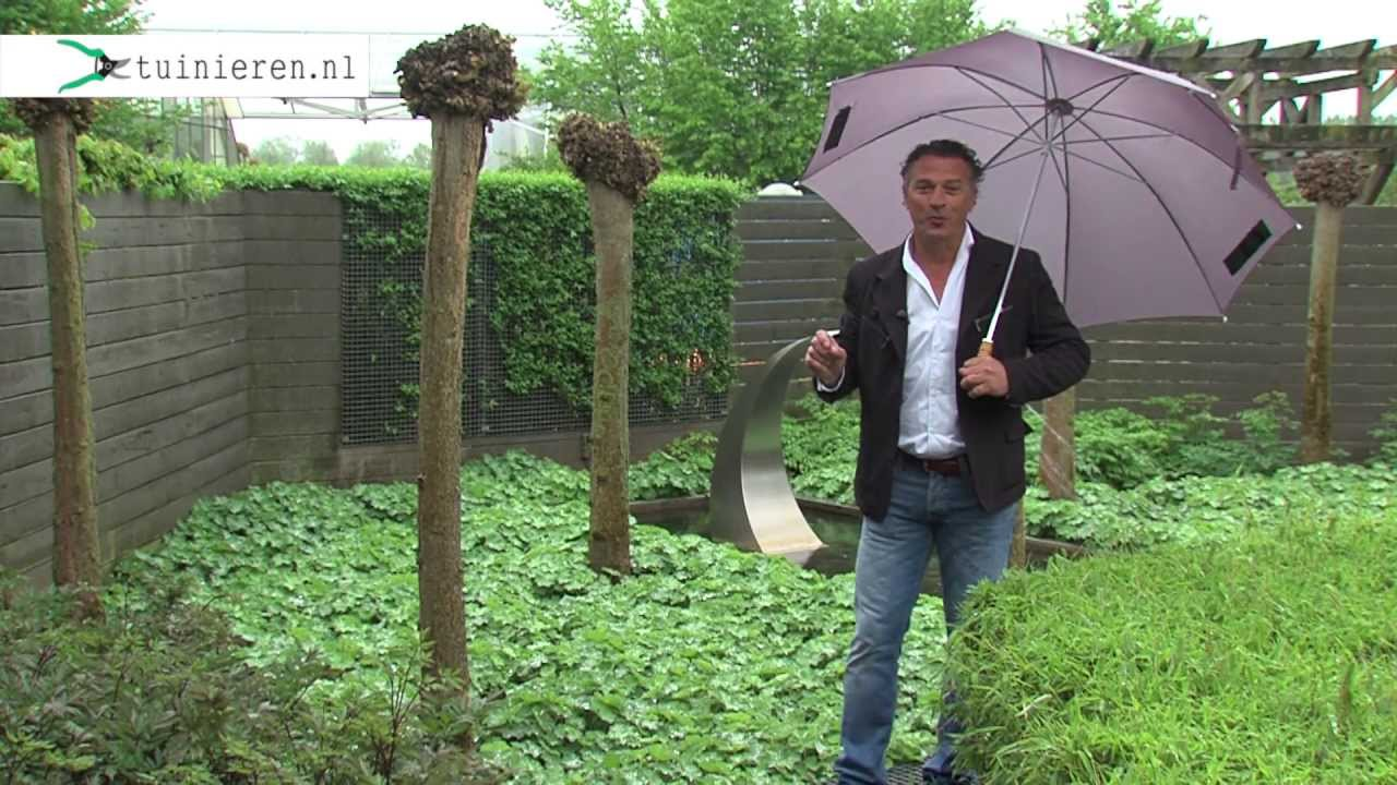 Onderhoudsvriendelijke Tuin Aanleggen : Onderhoudsvriendelijke onderhoudsvrije tuin aanleggen tuinieren