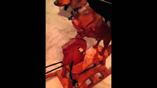 Rusty on the rocking horse