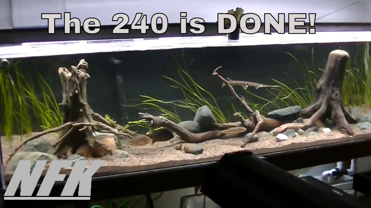 240 Gallon North American Native Aquarium Youtube
