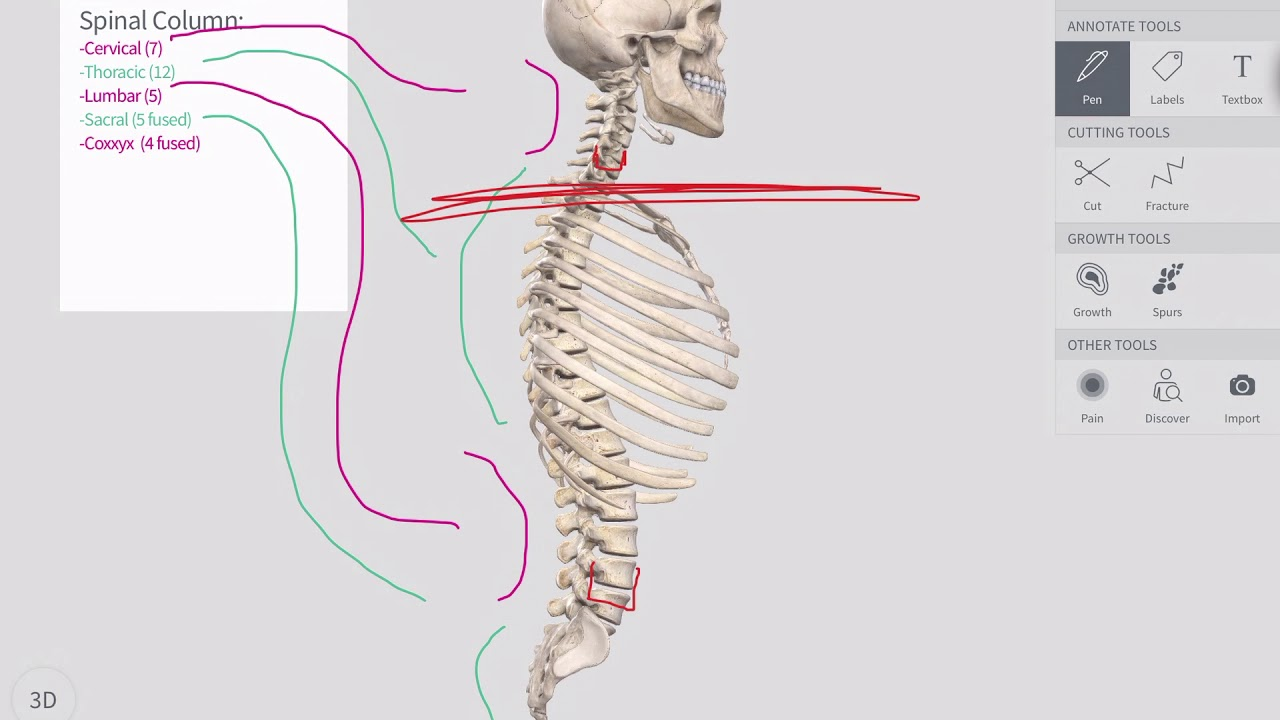 Spinal Structure Anatomy Overview - YouTube