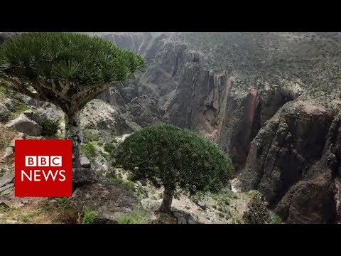 Yemen's island 'jewel' under threat - BBC News