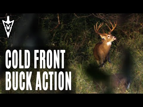 Cold Front Buck Action | Midwest Whitetail