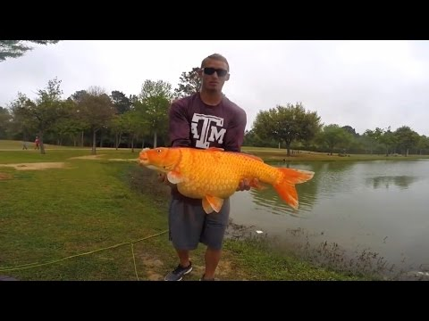 Giant koi caught on a fly rod youtube for Trout fishing ponds near me