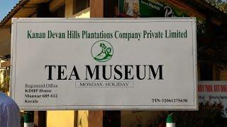 Tea Manufacturing