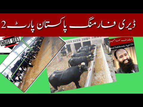 Dairy Farming Part 2( Milking animals) Pakistan Dr. Ashraf Sahibzada