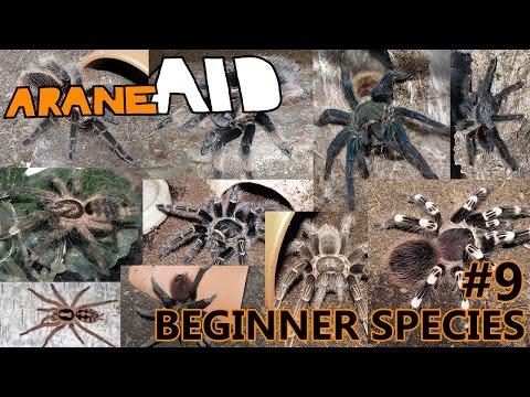 Episode 9 - Beginner Tarantula Species