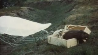 Parachuting beavers: Archive footage shows kooky 40s project, USA