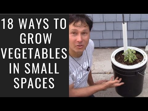 18 Ways to Grow Vegetables in Small Spaces