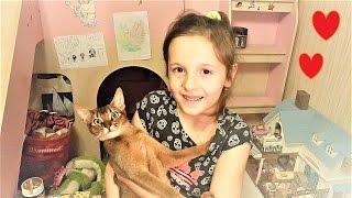 Мой домашний питомец абиссинская кошка Лея! Рассказ о моей кошке и ее характере