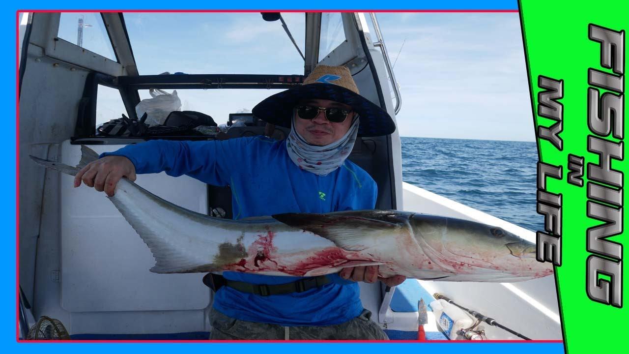 เจอแล้ว!!!!!จิกกิ้งจนเจอ ปลาช่อนทะเล 20 กิโล เล่นเอาเหนื่อย l ตกปลากับ aen