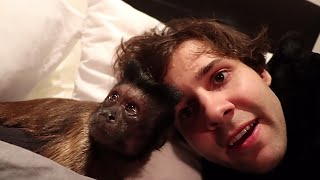 David Dobrik's Vlogs Best Moments #1