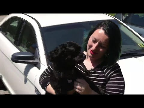 Sylvia Chacon - Airline Company Accidentally Loses Dog when Sent to the Wrong City.