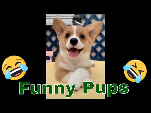 baby dogs cute and funny dog videos compilation 2019