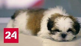 Собакам, кошкам, рыбам и пчелам выдадут паспорта
