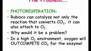 photosynthesis c3 c4 cam