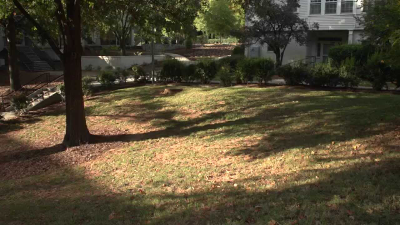 Two Views On Shade And Turf
