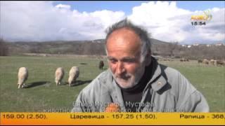 Овцевъди от двете страни на границата