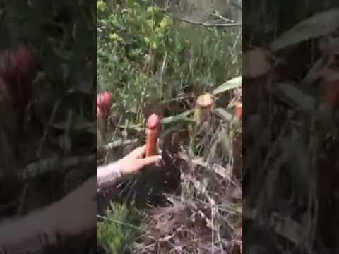 Erkek Organına Benzeyen Bitkiler