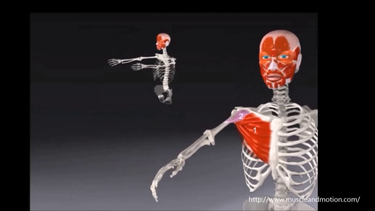 Bewegungsausmaß Schultergelenk - YouTube