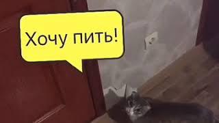 Котёнок хочет пить