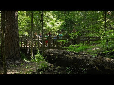Caddo Lake State Park - Texas Parks & Wildlife [Official]