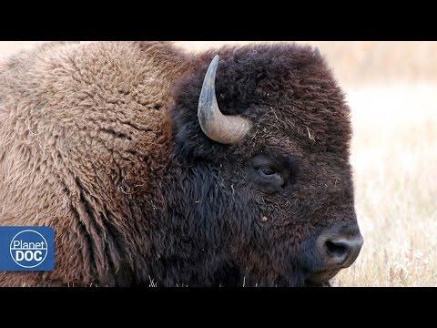 Yellowstone National Park | Fragile World (Part 8)