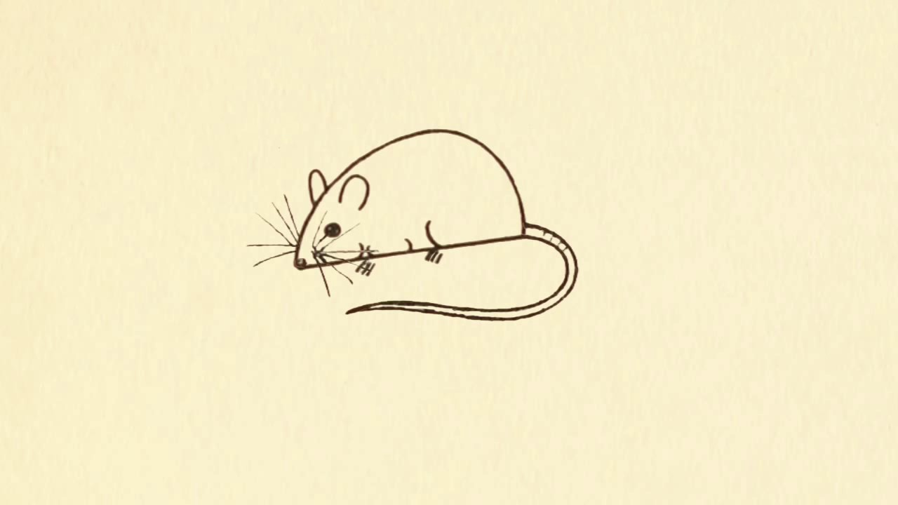 How To Draw Simple Rat